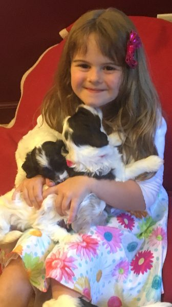 6.12.16 MOLLY LORI BALL'S GRANDAUGHTER WITH CALLIE PUPPIES @ 4 WEEKS OLD (2)